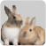 Logo Onlinedierenspeciaalzaak.com